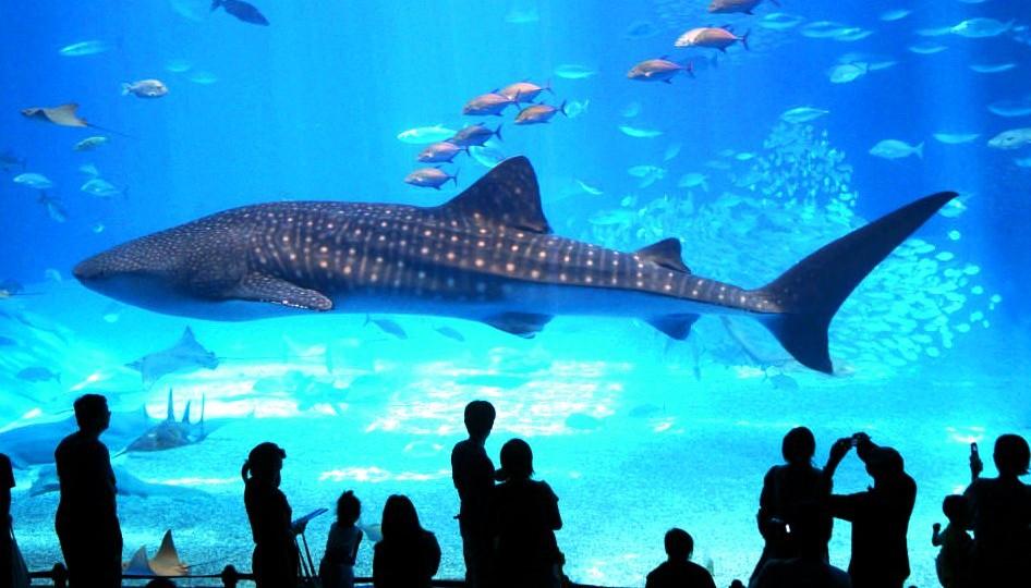 аквариум Хургады, Египет