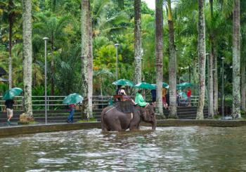 Онлайн веб камера бассейн для слонов Бали, Индонезия
