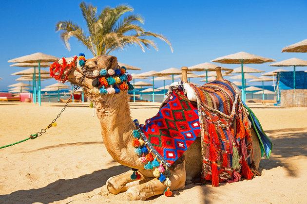 Верблюжьи бега в хургаде египет