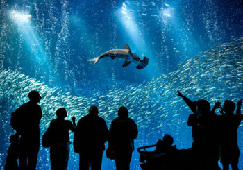 Онлайн веб камера океан под водой аквариум Монтерей США