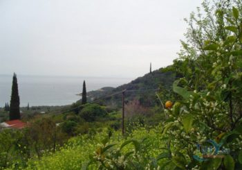 Онлайн веб камера Греция лимонная ферма в Пелопоннес