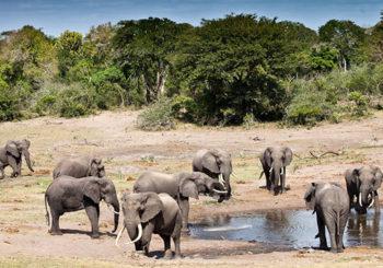 Онлайн веб камеры в сафари парке в Мапуталенде ЮАР